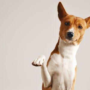 dogledesign kutya nyakörv