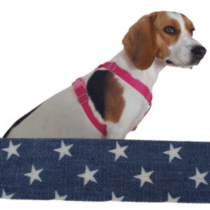 csillagok kutyahám