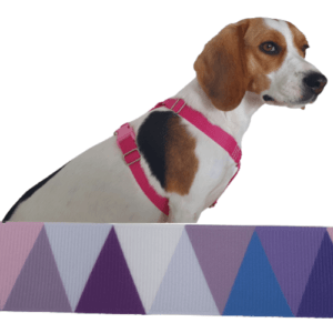 lilla cikk cakk kutyahám
