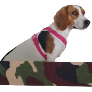 terepen kutyahám