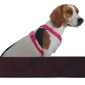 csokiszív kutyahám