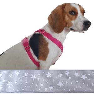 ezüst kutyahám