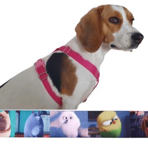 kiskedvencek kutyahám