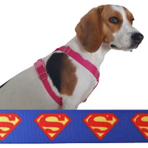 superman kutyahám