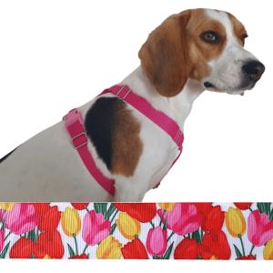 tulipán kutyahám