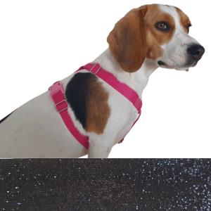 elegáns kutyahám
