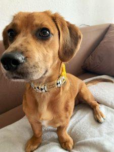 kutyus geometria kutya nyakörvben