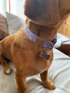 kutyus unikornis kutya nyakörvben3