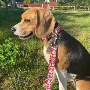 amira beagle cseresznye kutya nyakörv póráz szett1