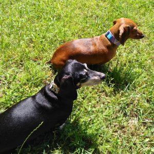 geometria ombre kutya nyakörv5